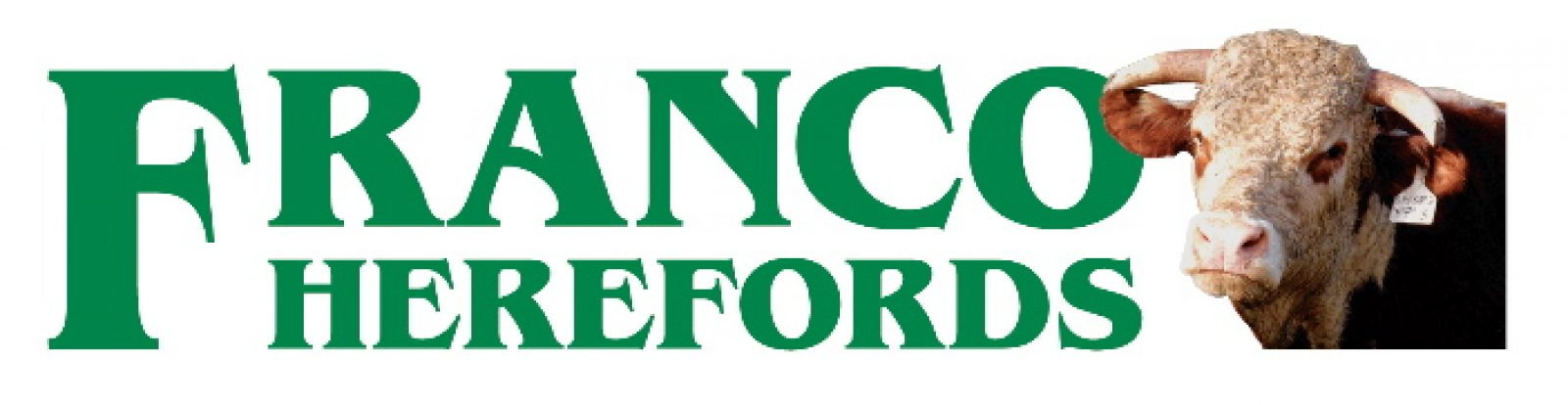 FRANCO QUINN Q610 (H)