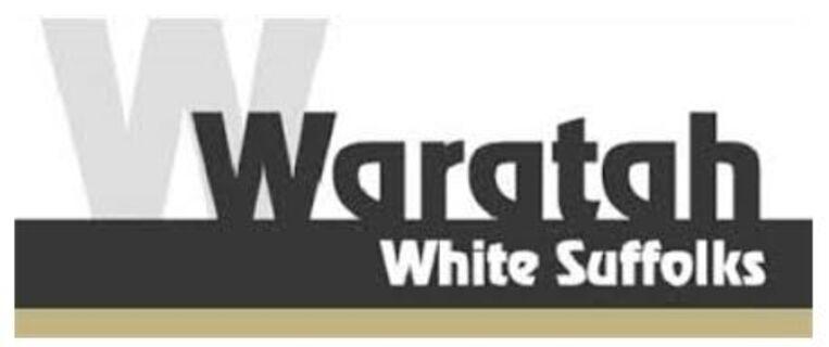 Waratah 200718