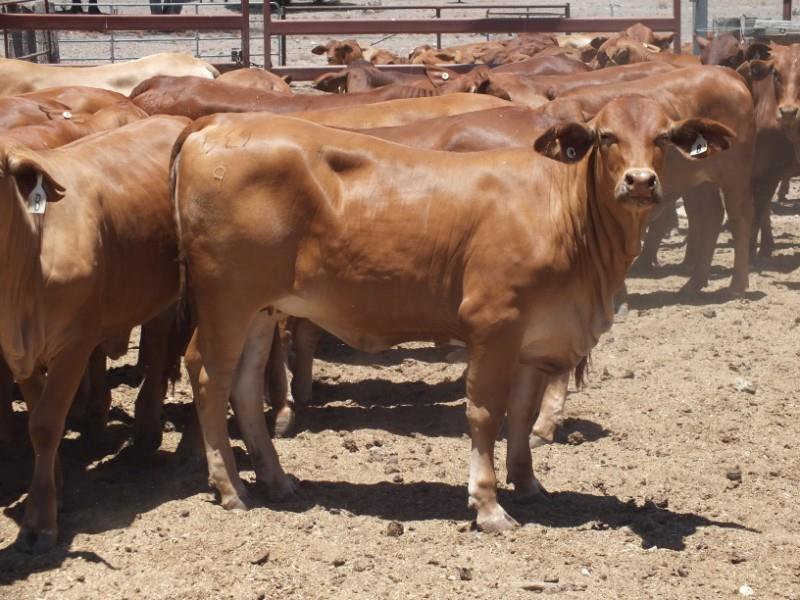 105 NSM Future Breeders
