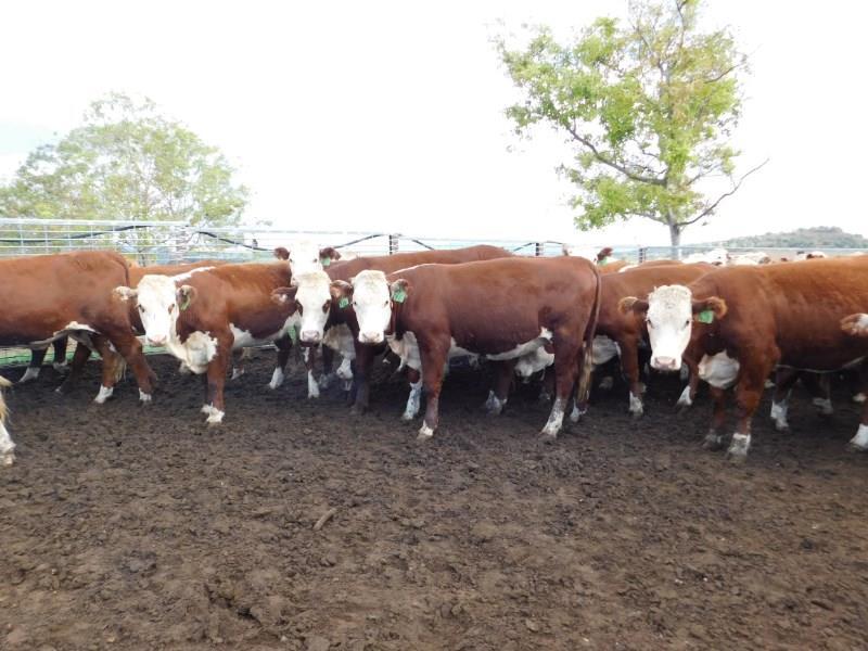 60 NSM Future Breeders