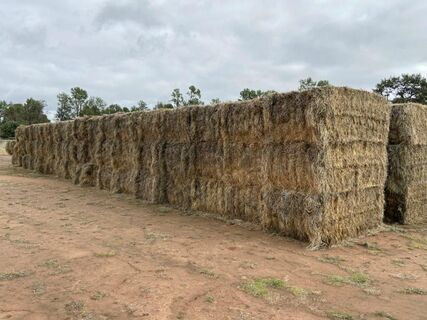33x New Season Square Hay Bales (Not Shedded)