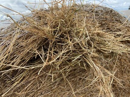 34x Oaten Hay Round Bales (Not Shedded)
