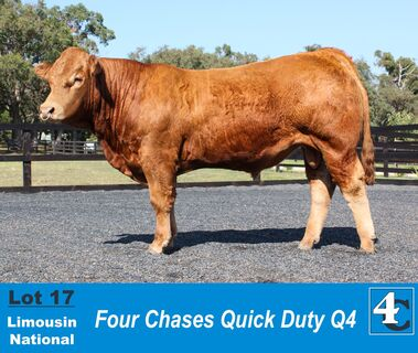 FOUR CHASES QUICK DUTY (HP) (PF)