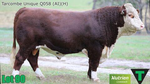 TARCOMBE UNIQUE Q058 (AI) (H)