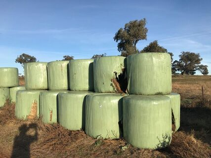 15 x Lucerne clover and pasture silage bales