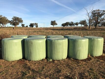 9 x Lucerne clover and pasture silage bales