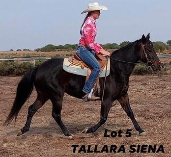 Tallara Siena Q-94374