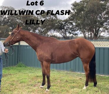 Willwin CP Flash Lilly