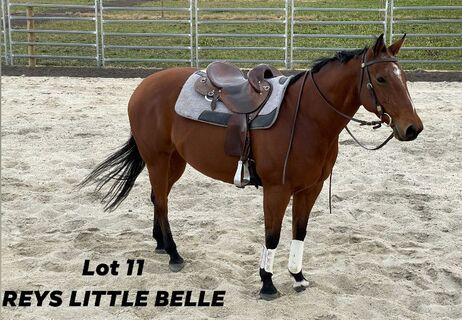 Reys Little Belle Q-71040