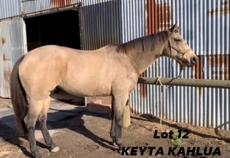Keyta Kahlua 234840