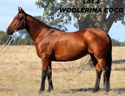 Woolerina Coco C1-237918