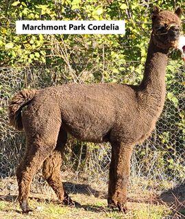 Marchmont Park Cordelia