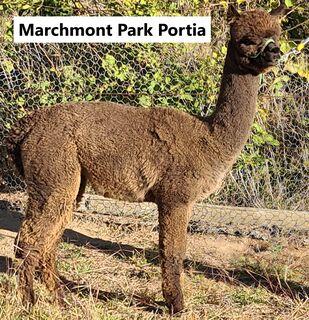 Marchmont Park Portia