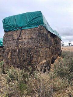Wheaten Hay, Approx. 200 Bales