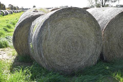 10 Rolls Pasture Hay (2020)