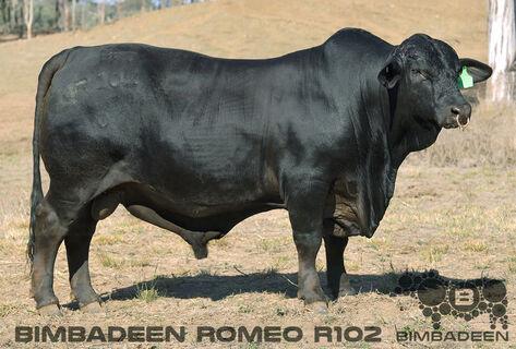 BIMBADEEN Q ROMEO R102 (P)