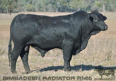 BIMBADEEN Q RADIATOR R146 (P)(AI)