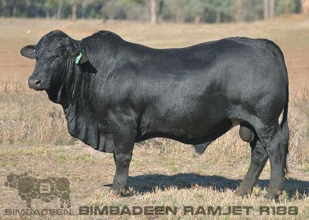 BIMBADEEN Q RAMJET R188 (P)