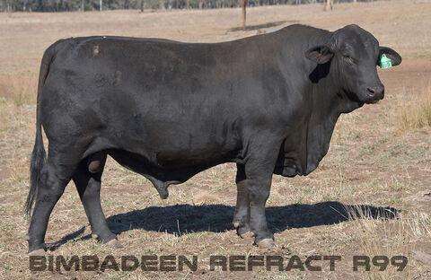 BIMBADEEN Q REFRACT R99 (P)
