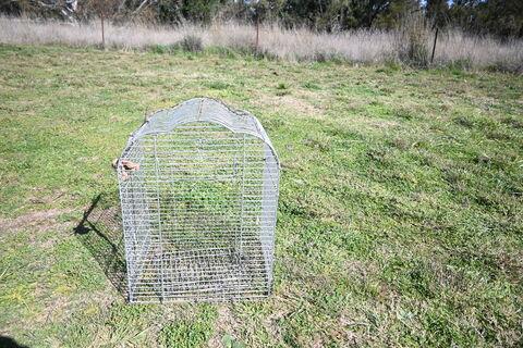 Bird Cage - Smaller