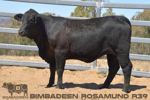 BIMBADEEN Q ROSAMUND R39 (P)