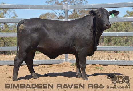 BIMBADEEN Q RAVEN R86 (P)