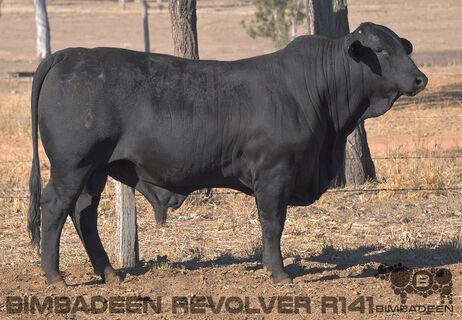 BIMBADEEN Q REVOLVER R141 (P)