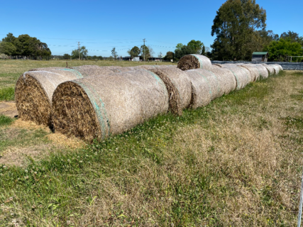 APPROX. 70 SORGHUM ROUND BALES