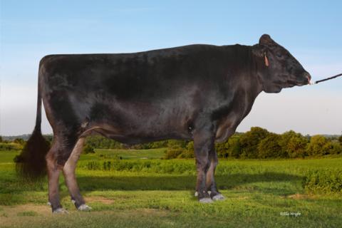TFWFM0248 TAKEDA FARM KINUYASU DOI (ET)