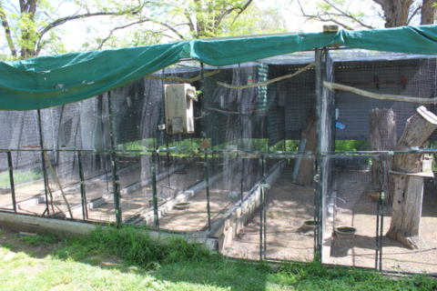 A SINGLE BLOCK OF AVIARIES- 5M WIDE,