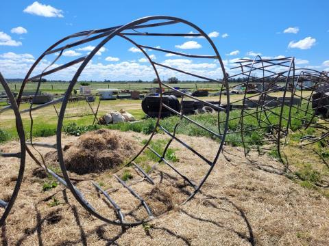 Single Hay Ring (C)