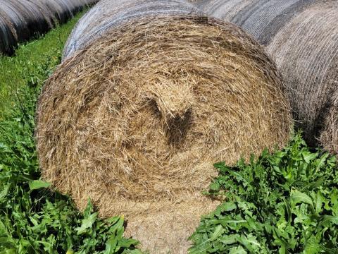 Certified Organic Sub/Rye Hay 48 Rolls (B)