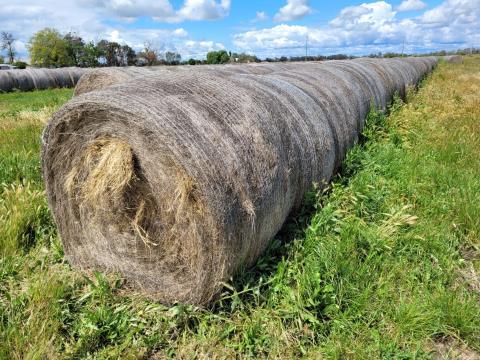 Certified Organic Sub/Rye Hay 48 Rolls (D)