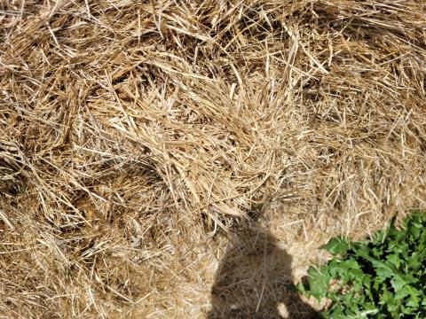 Certified Organic Sub/Rye Hay 48 Rolls (E)