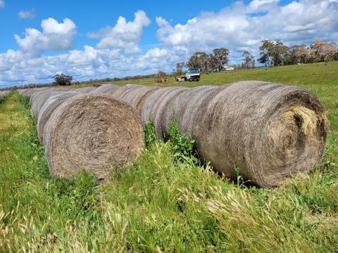 Certified Organic Sub/Rye Hay 48 Rolls (J)