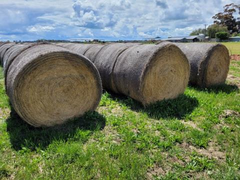 Certified Organic Pasture Hay 48 Rolls (D)