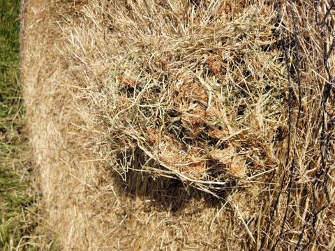 Certified Organic Pasture Hay 48 Rolls (A)