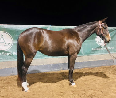 Tocal Sovereign (LH) - 3yo Mare