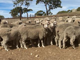 212 Scanned Empty Ewes