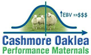 192 Station Mated Ewe Lambs