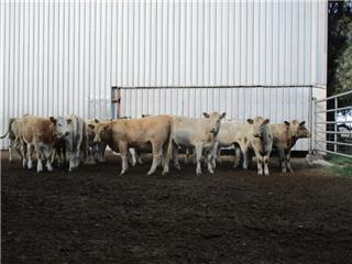 16 NSM Future Breeders