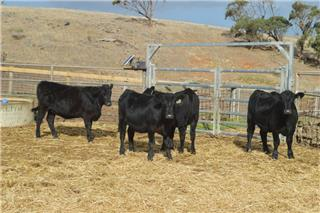 5 NSM Future Breeders