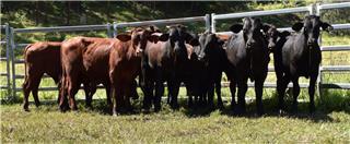 11 Backgrounder Steers