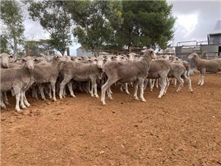 400 Wethers