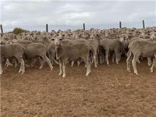 320 Wethers