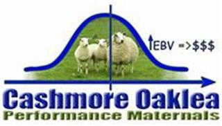 165 SIL Ewe Lambs