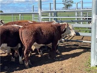 23 Backgrounder Steers