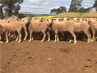 89 Ewes