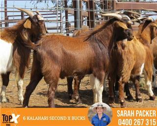 6 Goats - Bucks