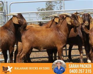 5 Goats - Bucks